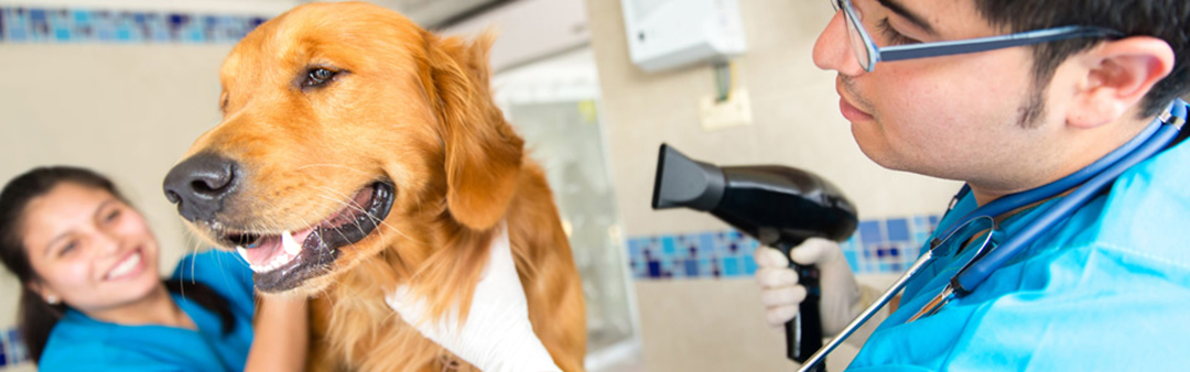 dog-grooming-facilities-page